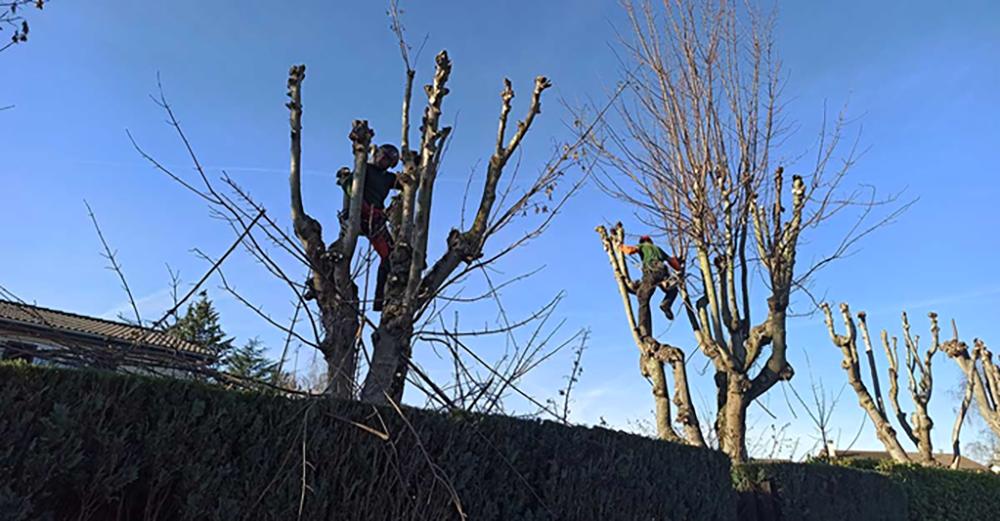 élagage arbre