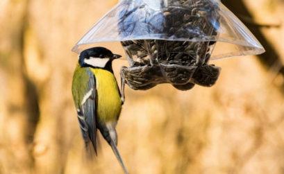 Attirer les oiseaux