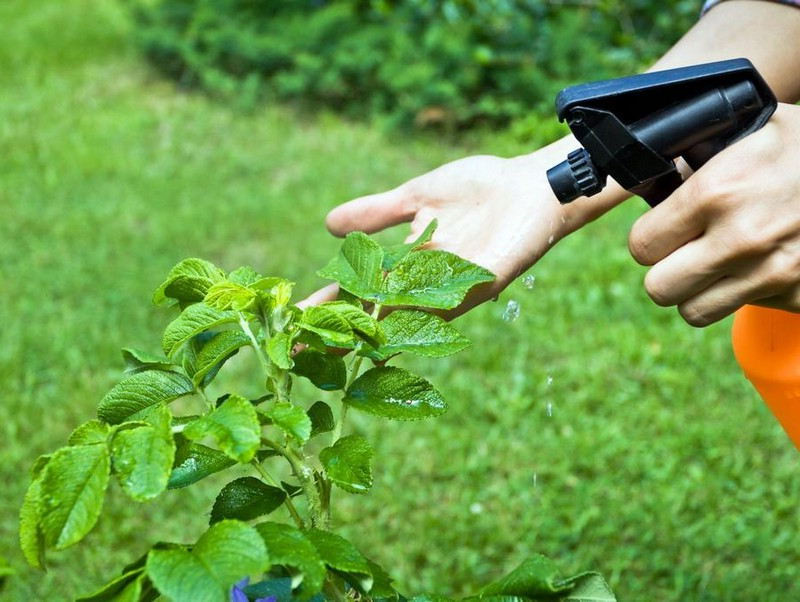 Vaporiser de l'eau sur une plante