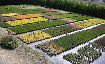 Pépinières de plantes