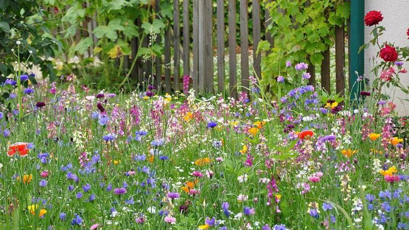 Habitat naturel dans votre jardin