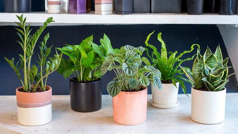 Plantes pour les chambres à coucher