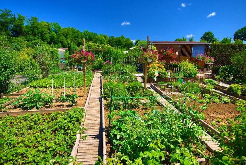 Organiser un jardin potager