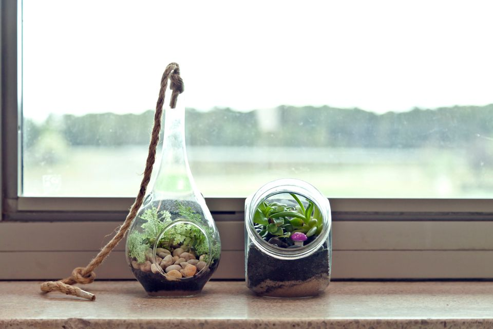 comment faire un terrarium