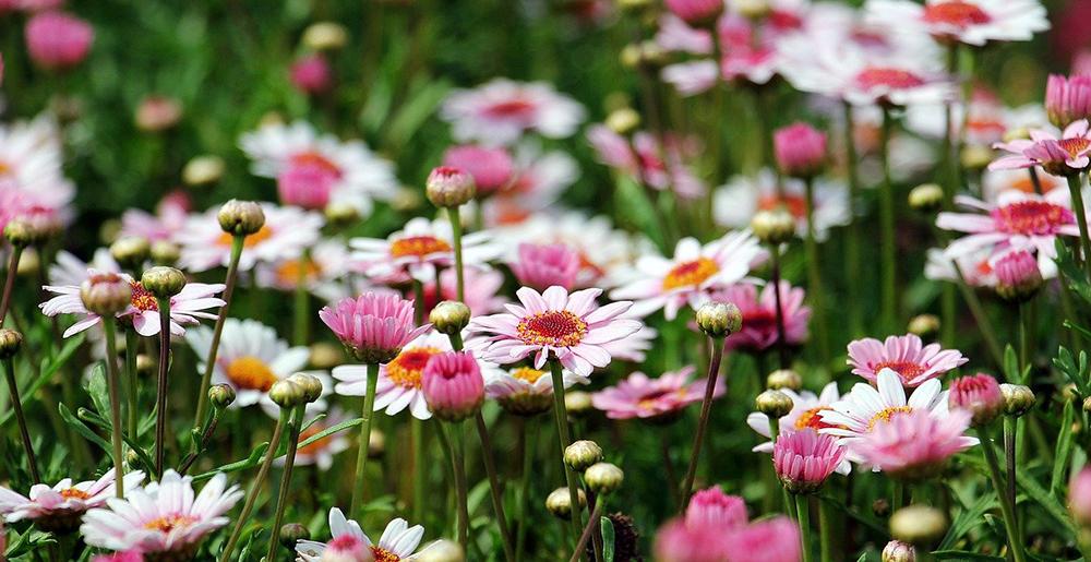 faire un massif de fleurs