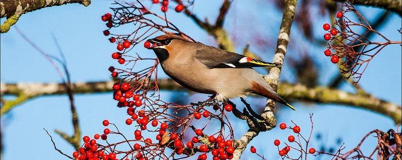 Attirer des oiseaux dans son jardin