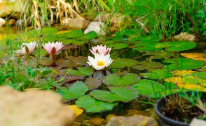 bâche bassin jardin