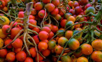 bienfaits noix d'amazonie
