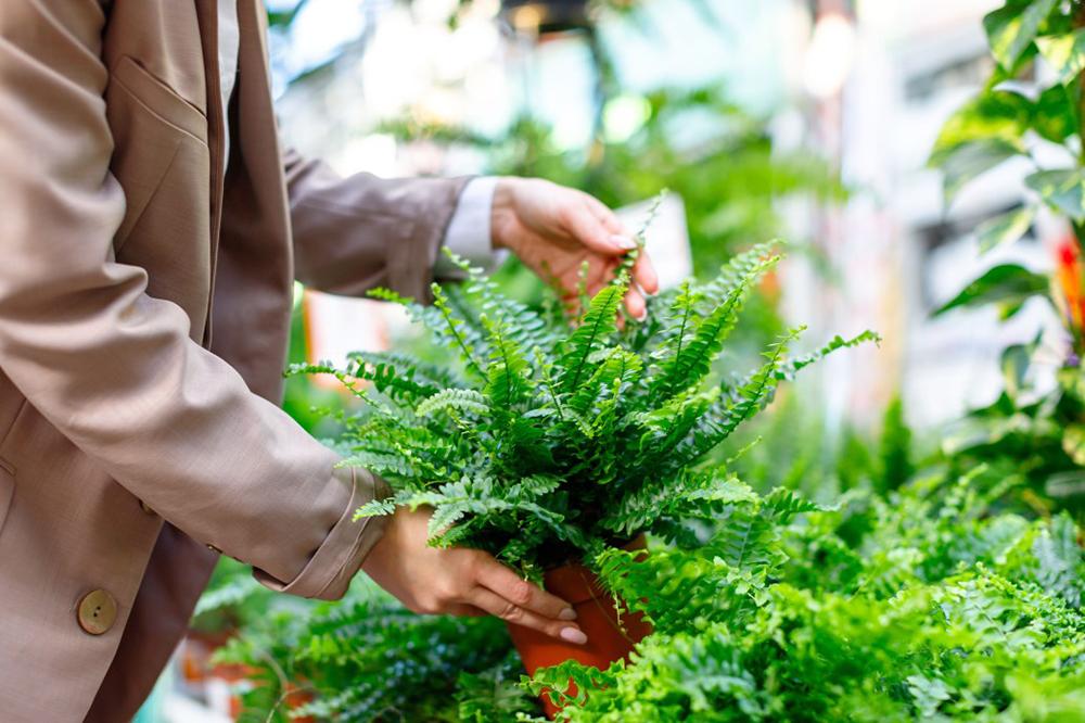 choisir des plantes