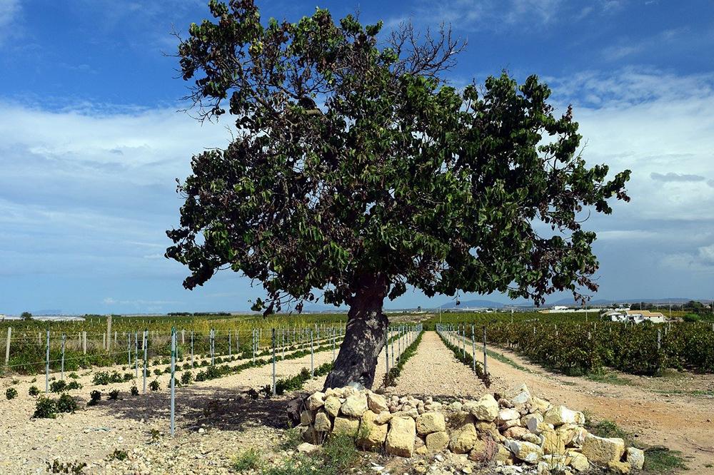 choix arbre