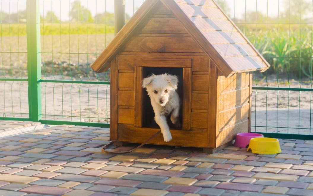 choix de niche de chien