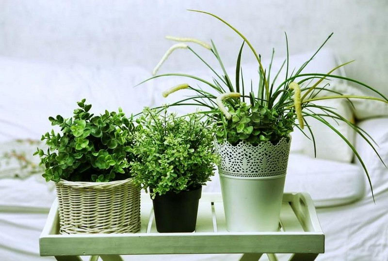 Choix d'une plante verte pour la chambre