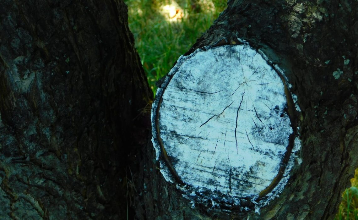 cicatrisant arbre