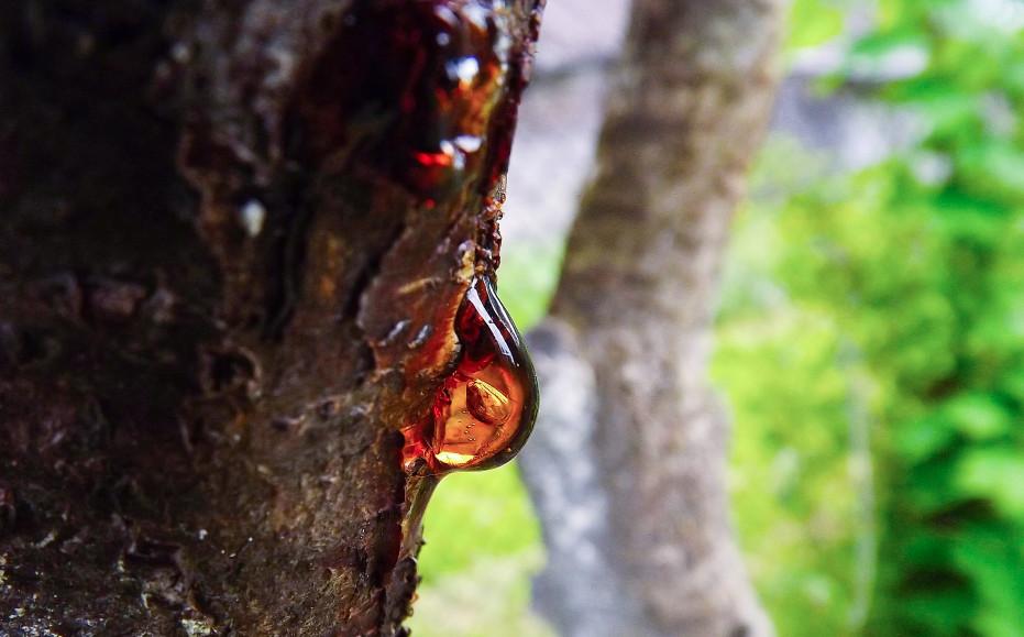 cicatrisant goudron de pin