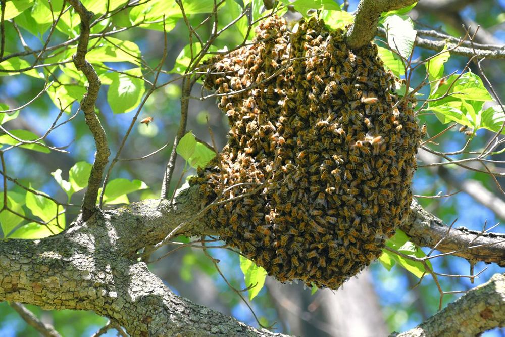 enlever une ruche