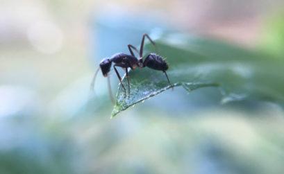 fourmis dans le jardin