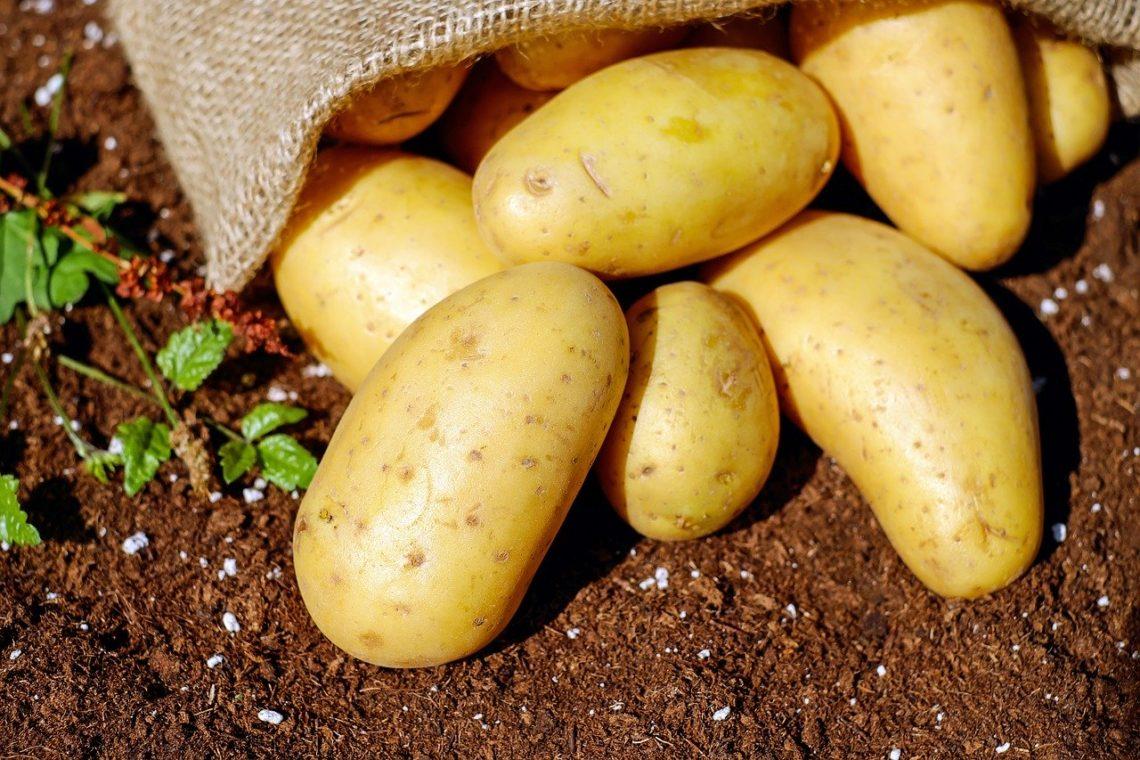 fruits et légumes chez grossiste bio