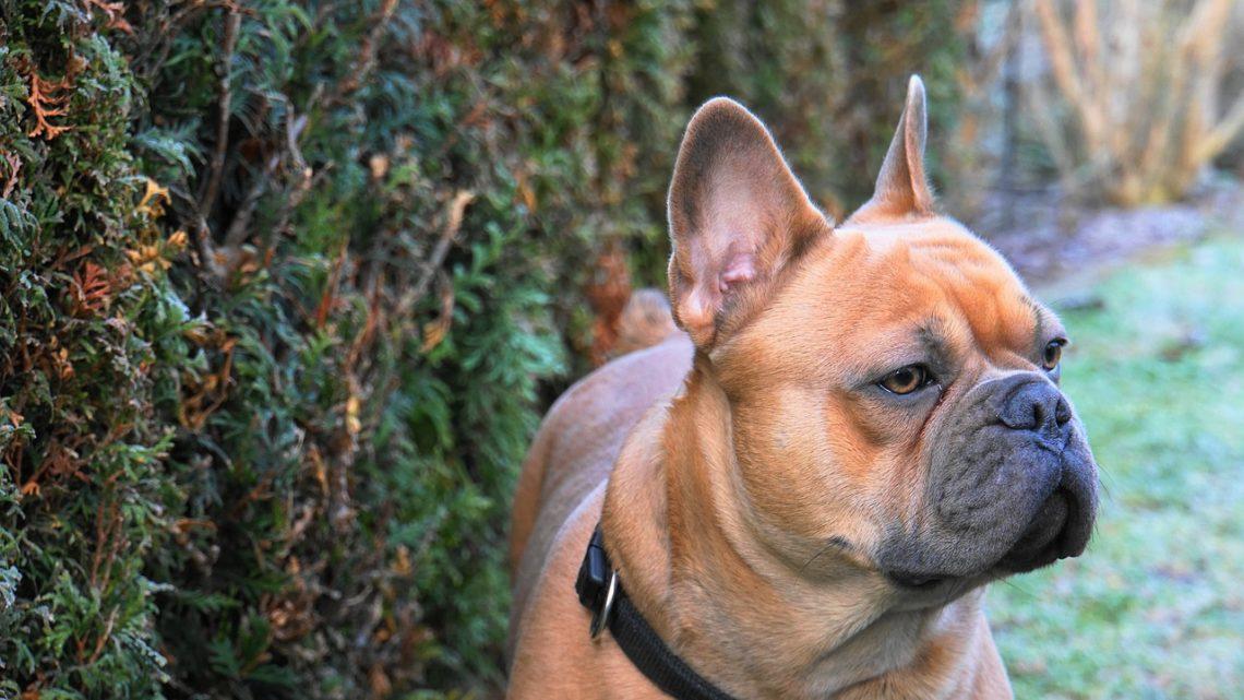 garder votre chien dans le jardin