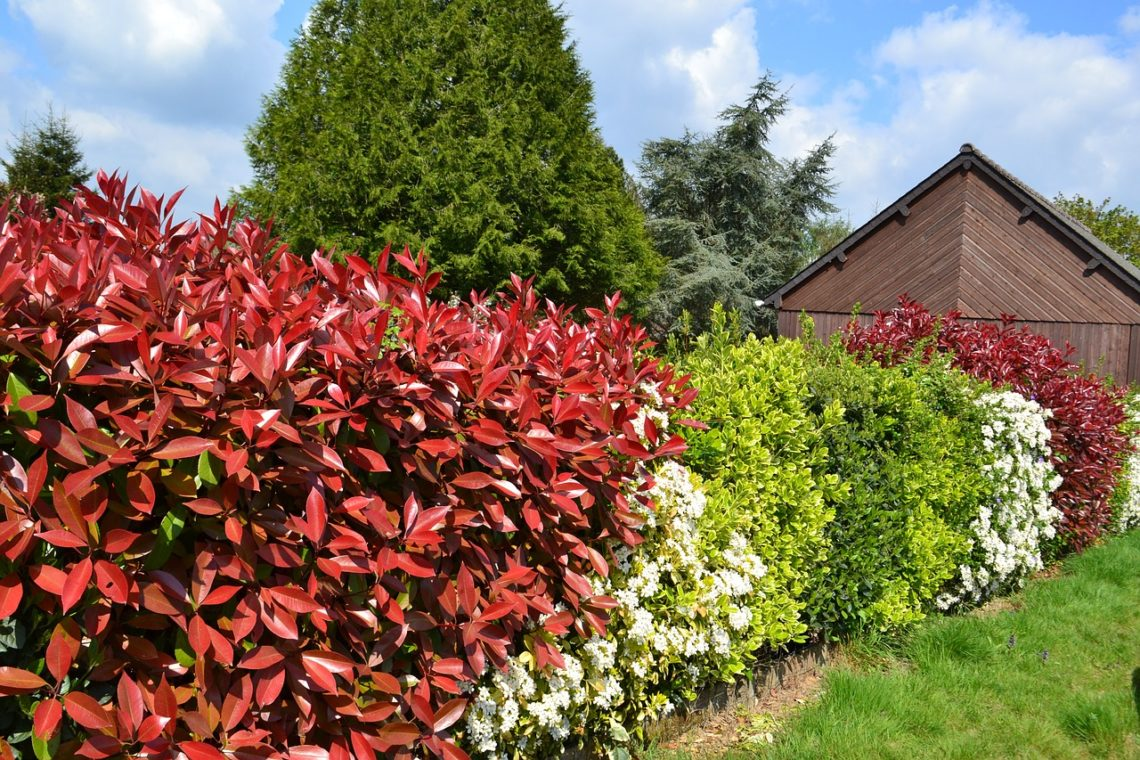 Arbuste Brise Vue Terrasse quelle haie végétale brise vue et infranchissable planter
