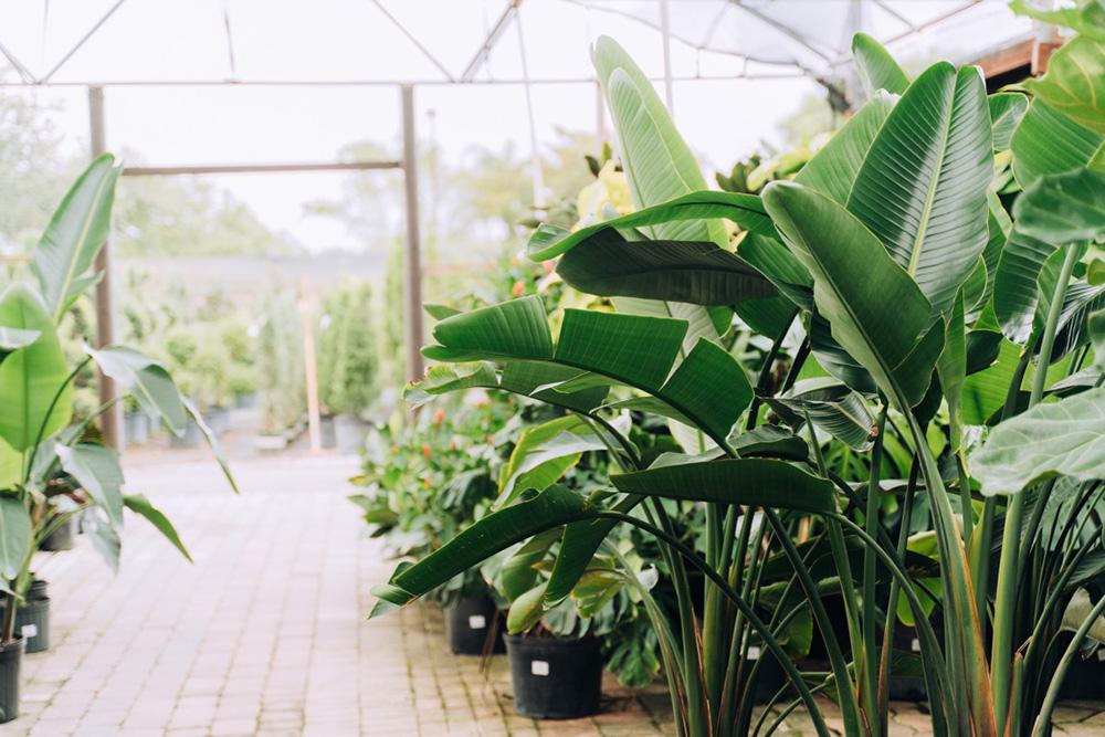 magasin de jardinage