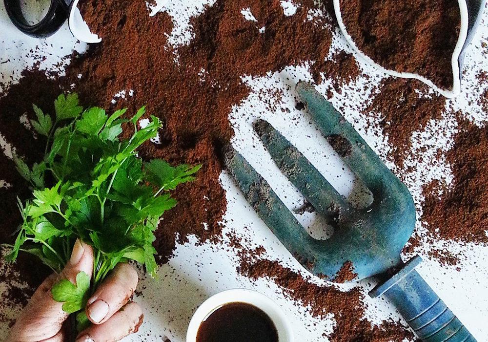 marc de café dans potager