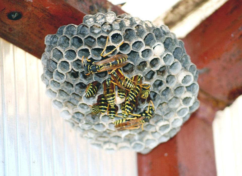 nid de guêpe toiture