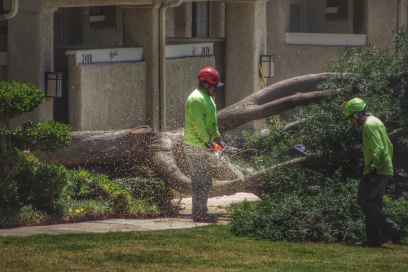 organiser coupe d'un arbre