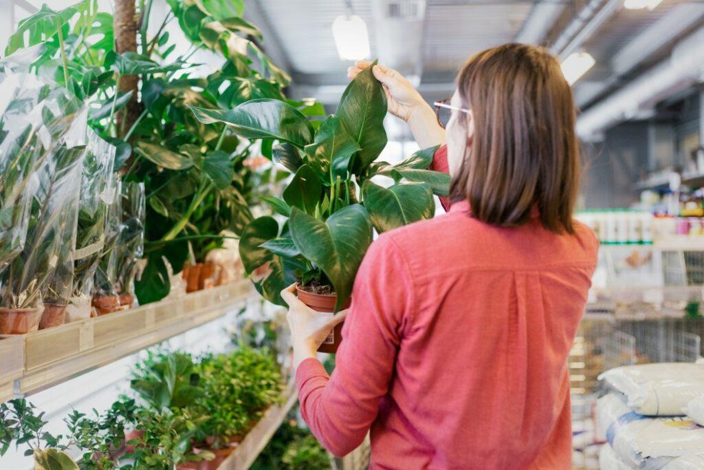 pépinière pour achats de plantes