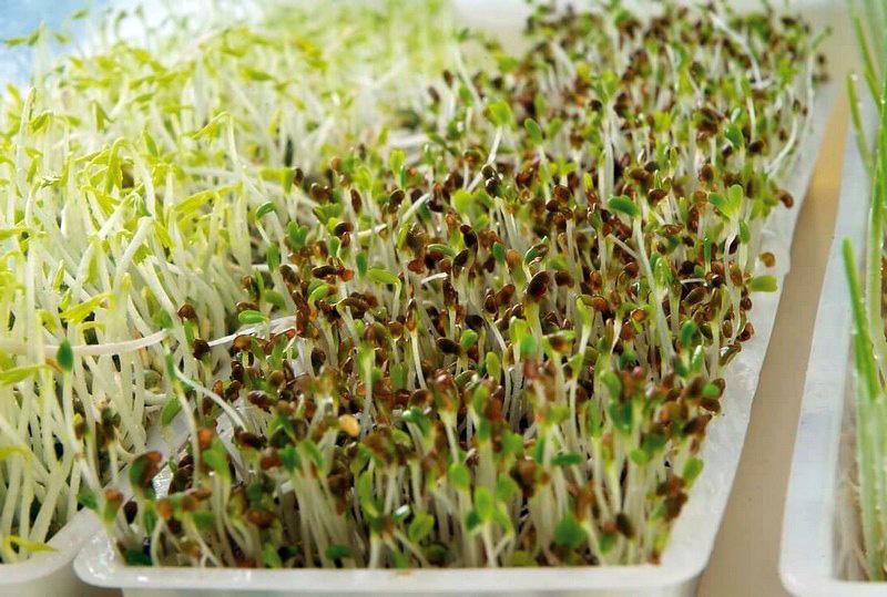 Plateaux pour germoir à graines