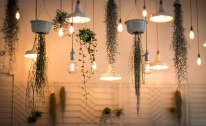 plante d'intérieur suspendue