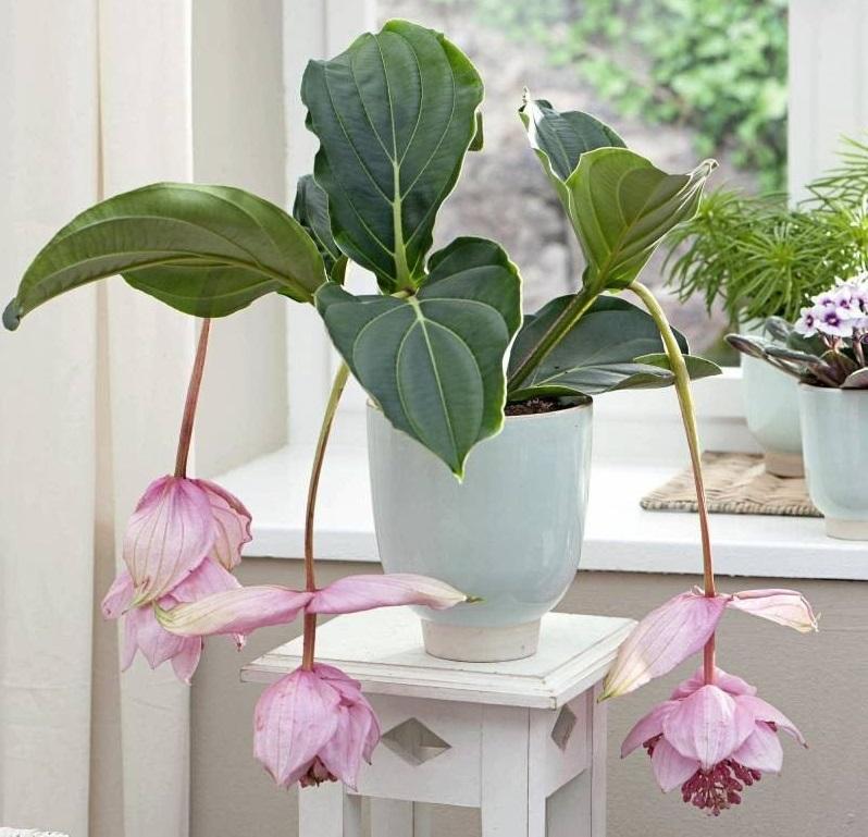 Choisir une plante intérieure