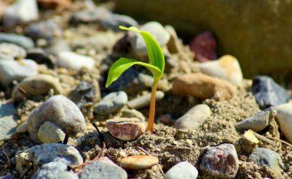 Plante poussant facilement grâce aux minéraux