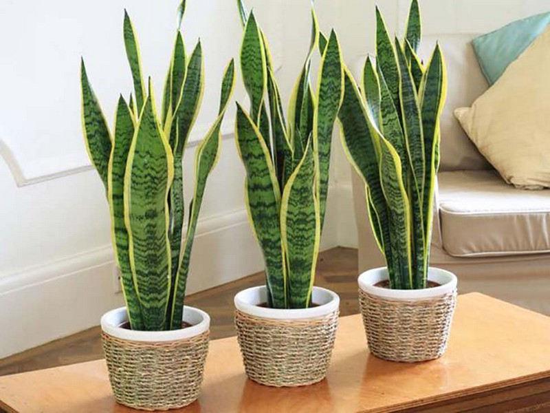 Les Plantes Vertes Pour Une Chambre Decouvrez Ces Plantes