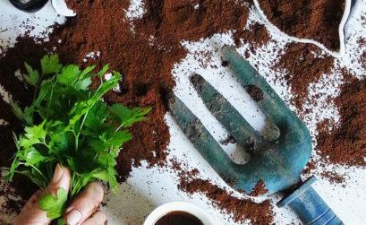 plantes et marc de café
