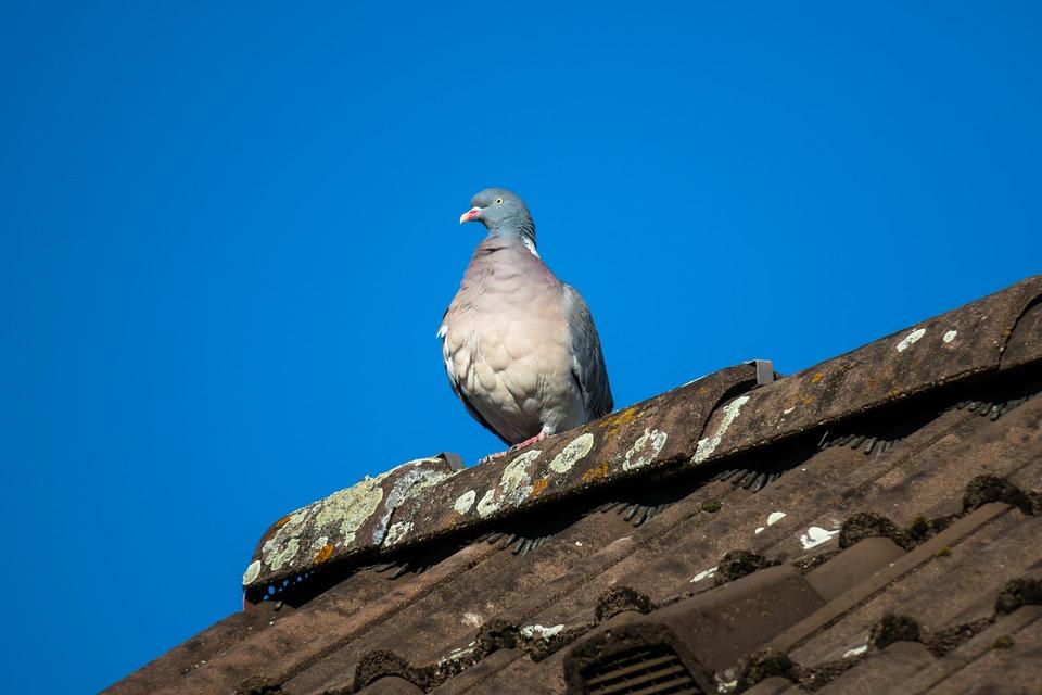 pose anti-pigeons
