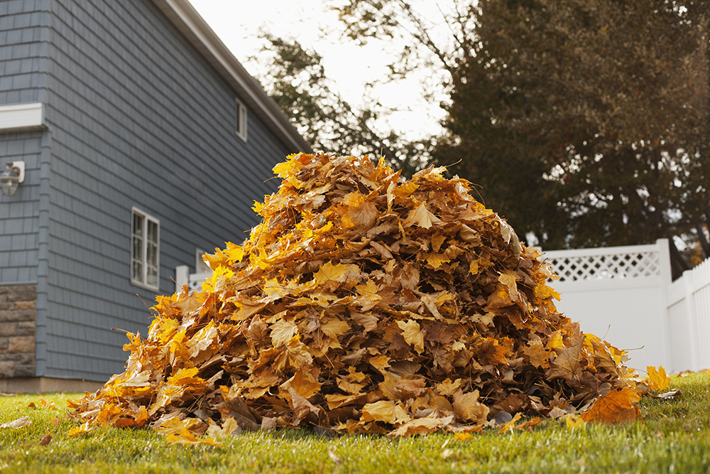 ramassage des feuilles efficace
